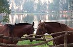 Foto #39718 - Horses in front of the lagoon
