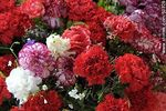 Photo #50328 - Bouquets of carnations