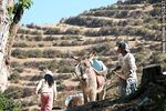 Foto #52437 - Transport of containers of water by donkey in the Isla del Sol Island, Lake Titicaca, Bolivia.